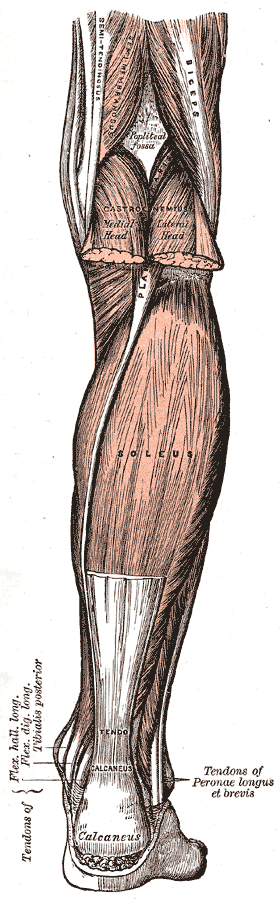 Anatomie Archive - agile Webzine